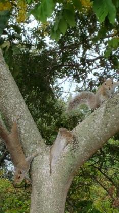 squirrels_uber